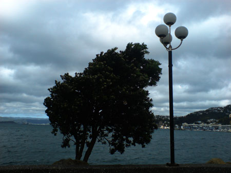 JPG of a tree on the Wellington waterfront