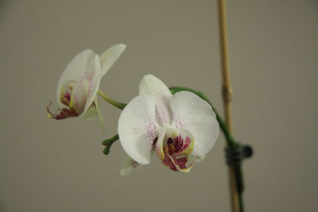 JPG image of orchid