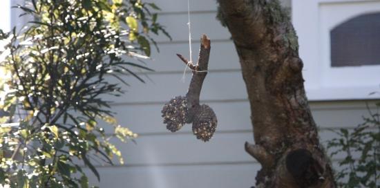Twin pine cone feeder