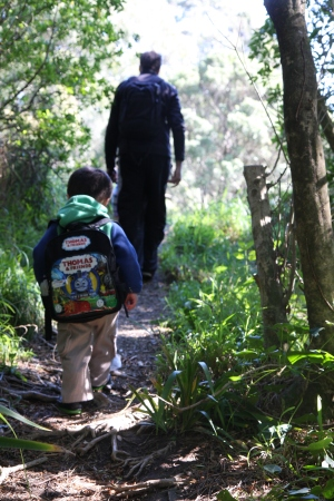 Walking in Mt Victoria